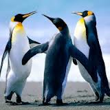 penguins brad hines funny animals meme