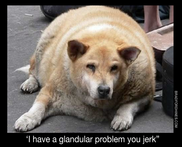 funny fat dog humor