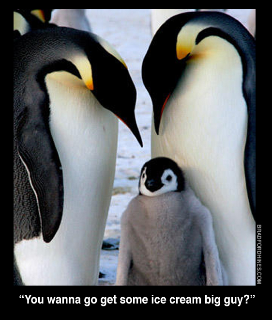 emperor penguins funny humor family ice cream